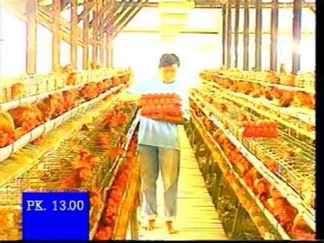 Pokphand Ayam Petelur manajemen ayam petelur