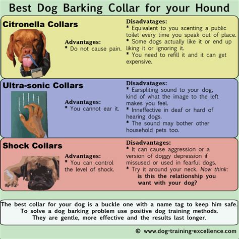 what to do if your dog is barking obsessively when you best shock collars for dogs you 4k wallpapers