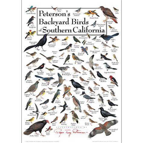 peterson backyard birds peterson s backyard birds of southern california poster