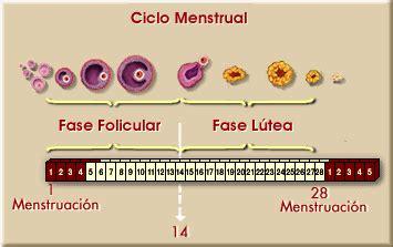 uno puede salir embarazada con la menstruacion proyecto biosfera