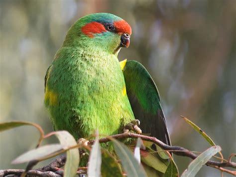 imagenes animales aves fotos de aves exoticas fotos e im 225 genes en fotoblog x