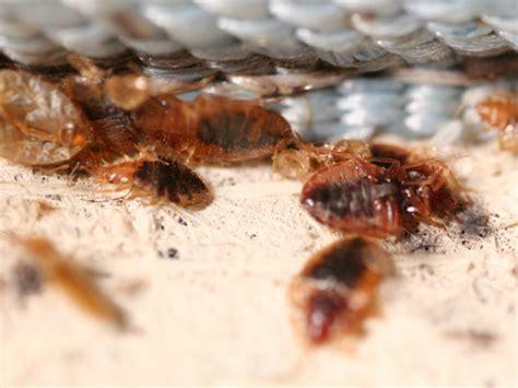natural bed bug killer bed bug killing spray bed bug bite remedy bedbug store
