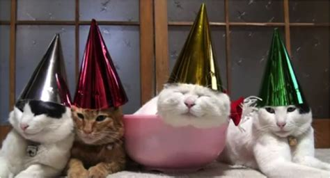the year of the cat new year happy new year cats vs cancer