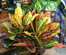Tropical Foliage House Plants - fafardhouse plant care 101 fafard