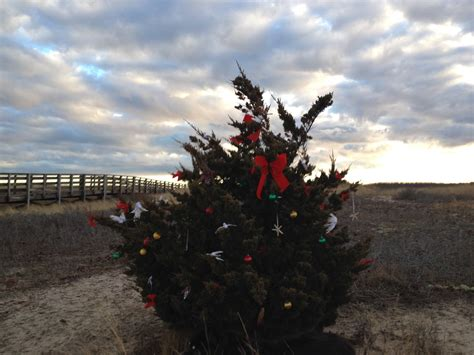 you cut christmas trees in the cape cod area buy local where to find eco friendly trees on cape cod robert paul properties