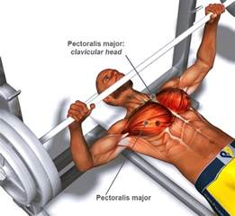 a guide to barbell bench press technique for