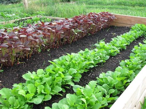Winter Garden Vegetable List Garden Ftempo Winter Vegetable Garden List