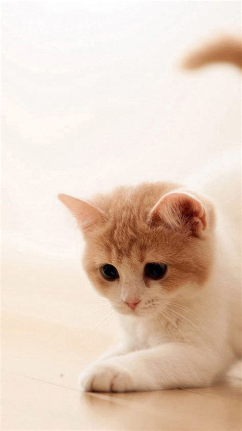 wallpaper cat iphone 6 cute cat 3 iphone 6 wallpapers backgrounds and themes