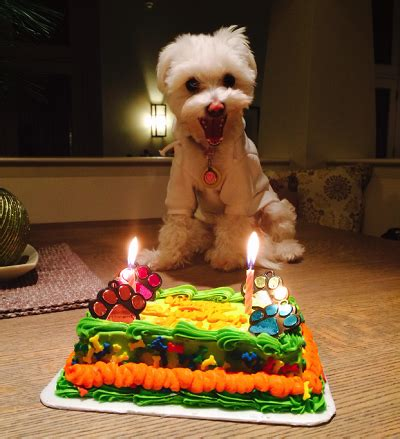 Birthday Surprises For Your Pet by Shop Zack Zoey Ruffwear Muttluks More Baxterboo
