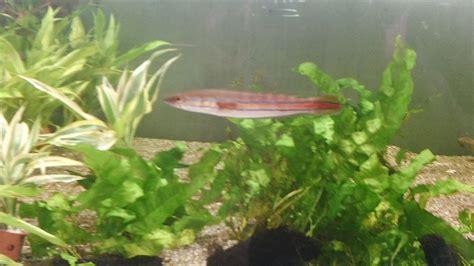 aksesoris akuarium tanaman hias akuarium budidaya ikan