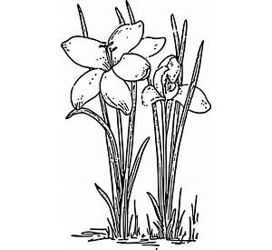 spring crafts and childrens activities crafts coloring pages - Spring Garden Coloring Pages