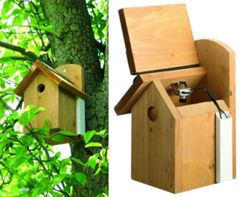gardman bird nest box with camera wild bird care