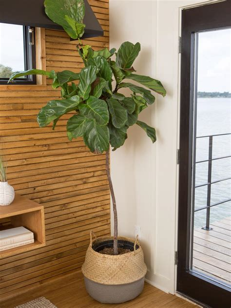 beautiful Decorating On A Budget #5: BP_HFXUP414H_houseboat_bedroom_master_detail_fiddle-leaf-fig-plant-254464_925366-1471315.jpg.rend.hgtvcom.1280.1707.jpeg