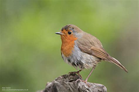 wildlife photography birds www pixshark com images