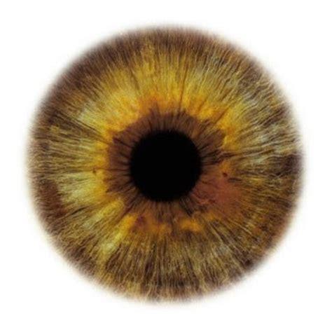 human eye color chart human eye color chart