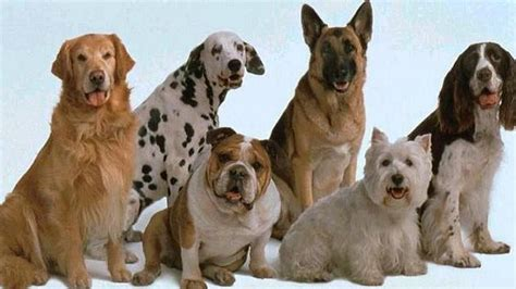 fotos animales juntos imagenes de perros juntos imagui