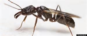 des milliers d insectes ont pris d assaut le stade