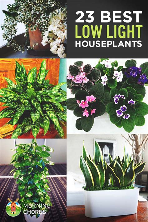 light houseplants   easy  maintain