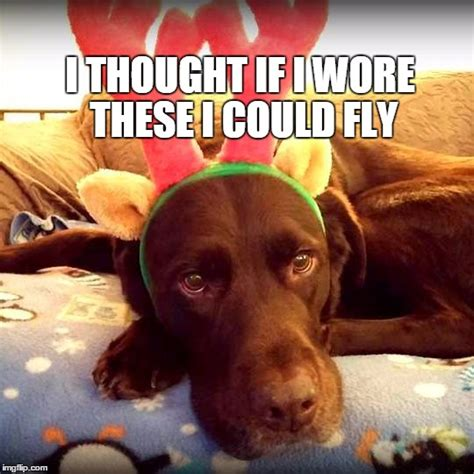 holiday dog meme pictures to pin on pinterest pinsdaddy