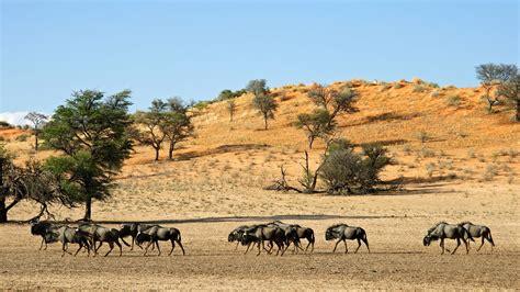 el desierto de los 8420669865 impresionantes im 225 genes de los 15 desiertos m 225 s grandes