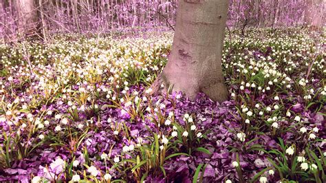 pink flower floor l free images tree blossom white meadow flower purple