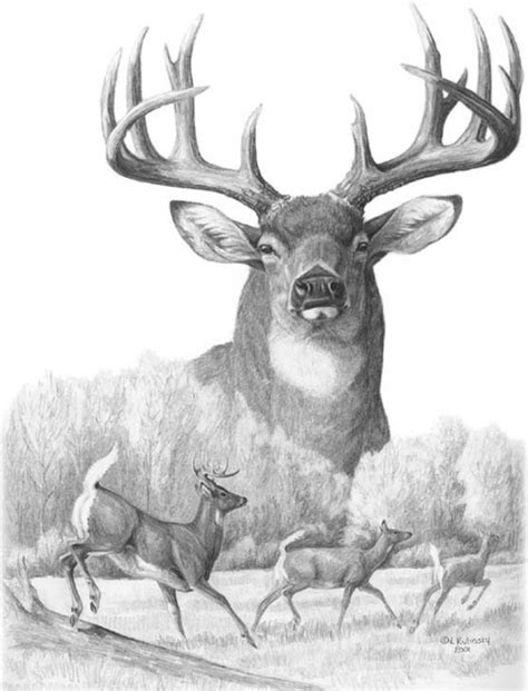 Free Big Buck Cliparts, Download Free Clip Art, Free Clip ... Whitetail Buck Drawings