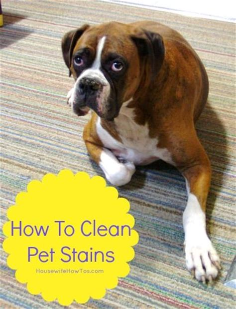 how to clean a seagrass rug pet stains how to clean pet stains carpets stains and pet stain removers