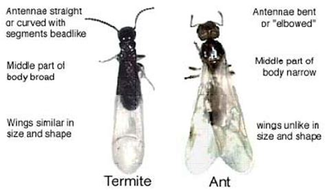 termites about termites in the north shore area dura tech pest control