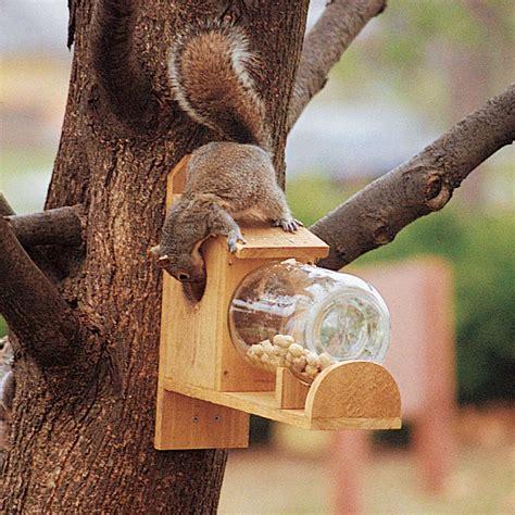 squirrel under glass feeder entertaining squirrel feeder the family handyman