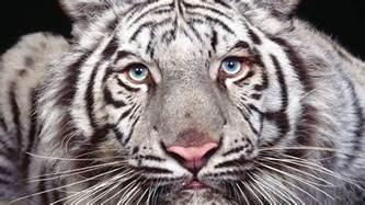 10 rarest animals earth