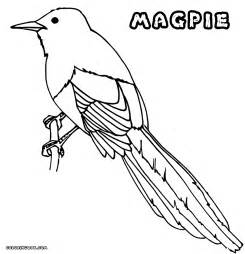 picture to coloring page magpie coloring pages coloring pages to and print
