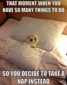 Nap Meme - 22 funny pictures for your monday game pics pictures of