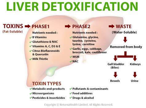 Symptoms Of Liver Detox Diet by The Detoxification Process Naturopathy By Savvas