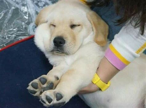 buzzfeed anxious puppy if you re in delhi and a bad day you can puppies brought to your doorstep