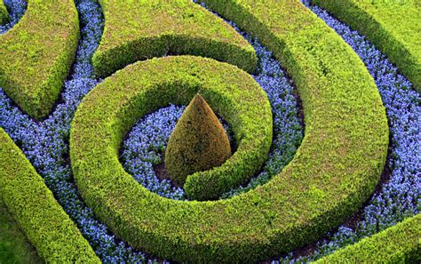 topiary design 53 stunning topiary trees gardens plants and other shapes
