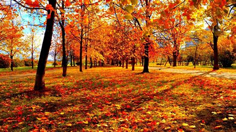 The In Autumn 3d fall wallpaper 183
