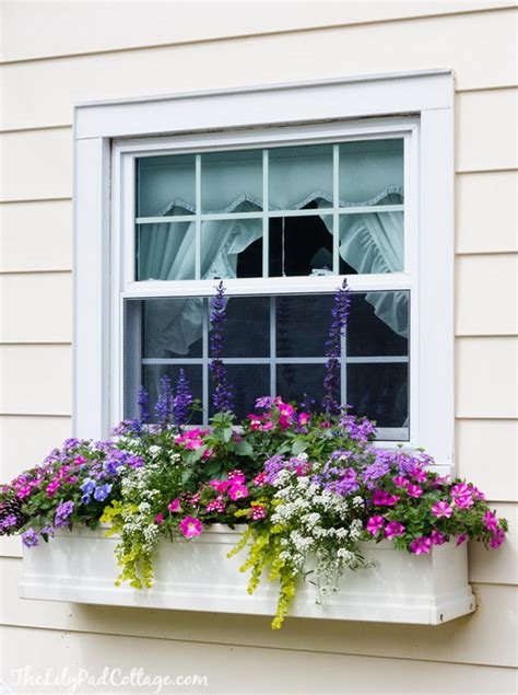 window box flower designs 25 creative window boxes hative