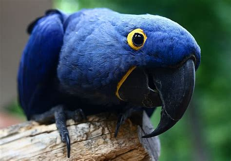 Birds Top top 10 most beautiful birds in the world the mysterious