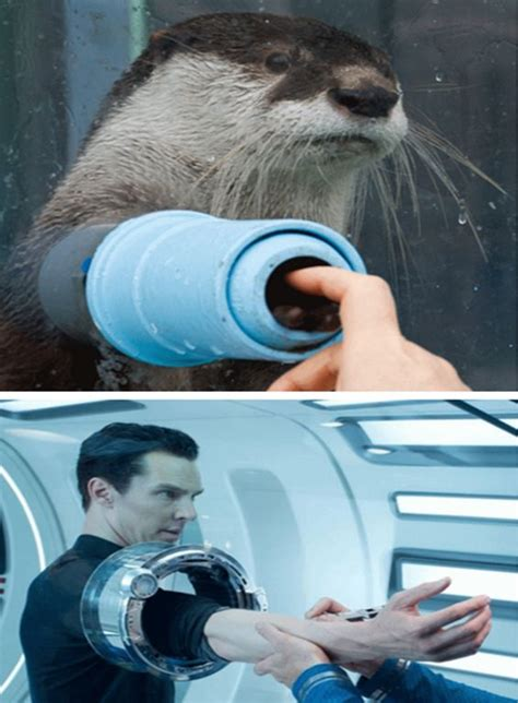 Cumberbatch Otter Meme - 352 best images about hunks on pinterest kirsten