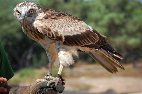 Pantopel Voo 02 52 gc69y9d 16 rota das aves da albufeira do pis 227 o beringel traditional cache in beja portugal