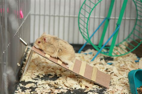 diy hamster bedding 3 ways to make toys for hamsters wikihow