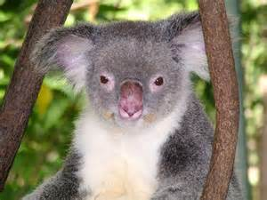Rainforest Animals In The Canopy by Treasure Trove Cairns Holiday Apartments Qld Australia
