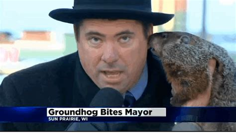 groundhog day jimmy wisconsin gif find on giphy