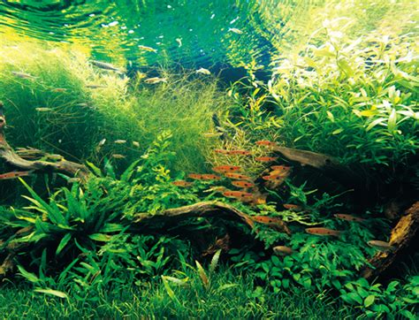 aquarium design amano indonesia nature aquarium from takashi amano