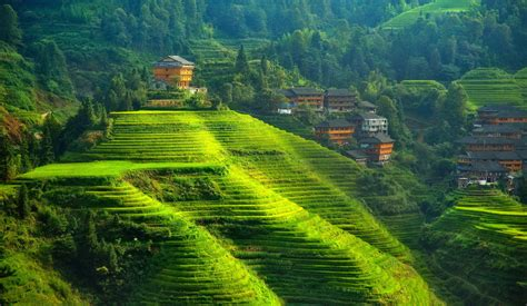 house on the hill desktop wallpaper wallpaper rice terraces tree greenery hill plantation