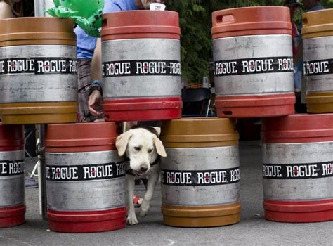 frogs and dogs rogue hosts 4th annual frogs and dogs