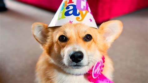 birthday dogs dogs birthday 50