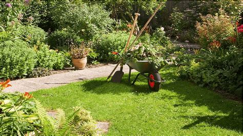 clean up backyard useful tips for your backyard clean up