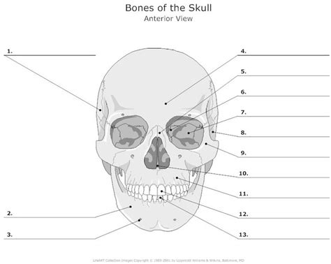 the human skull is divided into what two sections best 25 bones of the body ideas on pinterest