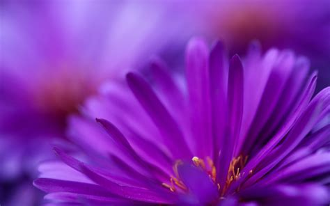 desktop wallpaper zoomed in zoom purple flower purple flowers wallpapers free photos